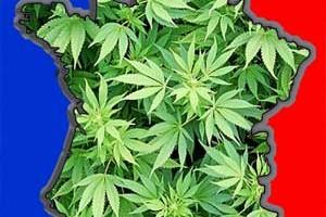 franciacannabis