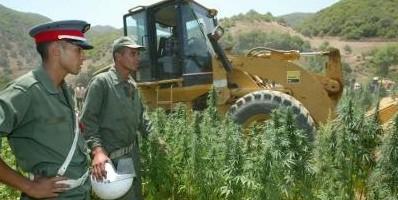 cannabismarruecos