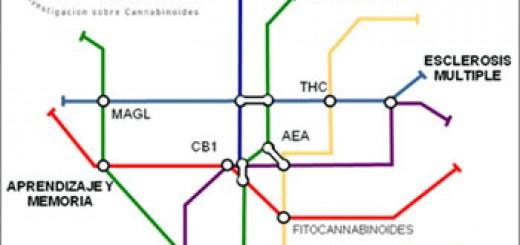 UCM_cannabis