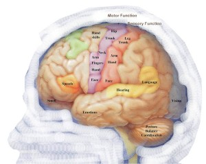 cerebroepilepsia
