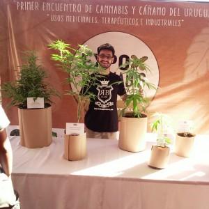 uruguayexpocannabisredbubble