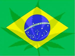 brasilmarihuancacannabis24h